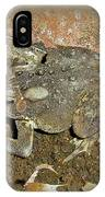 Common Toad - Bufo Americanus IPhone Case