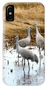 Congregating Sandhill Cranes IPhone Case