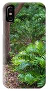 Coontie  Florida Arrowroot Or Indian Breadroot IPhone Case