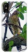 Cooper Hawk IPhone Case