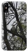 Cooper's Hawk Perched In Tree IPhone Case