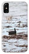 Coot In The Weeds IPhone Case