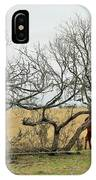 Cows 015 IPhone Case