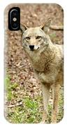Coyote In Cades Cove IPhone Case