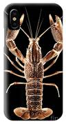 Crawfish In The Dark - Sepia IPhone Case
