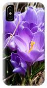 Crocus 1 IPhone Case