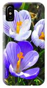 Crocus Tommasinianus IPhone Case