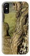 Curious Baboon IPhone Case