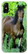 Curious Horse  IPhone Case