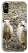 Curious Sheep IPhone Case