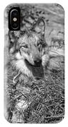Curious Wolf Pup IPhone Case