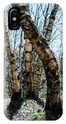 Curved Birch Tree IPhone Case