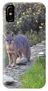 D-a0037 Gray Fox On Our Property IPhone Case