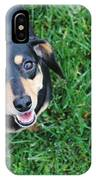 Dachshund Looking At Camera Smiling  IPhone Case