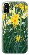 Daffodil Garden IPhone Case