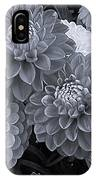 Dahlias Multi Bw IPhone Case