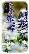 Daisies And Lupine IPhone Case
