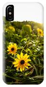 Daisies Tangled Sunrise Delray Beach Florida IPhone Case