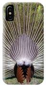Dancing Peacock, Kanha National Park IPhone Case