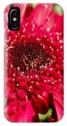 Dark Red Gerbera Daisy IPhone Case