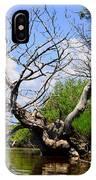 Dead Cedar Tree In Waccasassa Preserve IPhone Case