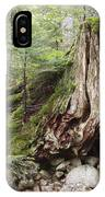 Decaying Tree Stump IPhone Case