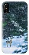 Deer In A Snowy Glade IPhone Case