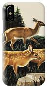 Deer In Forest Clearing IPhone Case