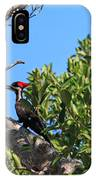 Ding Darling - Pileated Woodpecker Resting IPhone Case