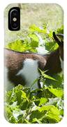 Domestic Pygmy Goat  IPhone Case