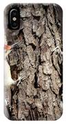 Downy Woodpeckers IPhone Case