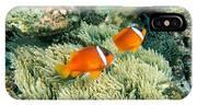 Dusky Clownfish IPhone Case