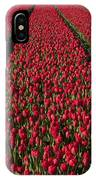 Dutch Tulips Second Shoot Of 2015 Part 1 IPhone Case