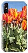 Dutch Tulips Second Shoot Of 2015 Part 3 IPhone Case