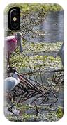 Eagle Lakes Park - Roseate Spoonbill And Friends, Socializing IPhone Case