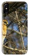 Early Morning Still Hunting  Coopers Hawk Art IPhone Case
