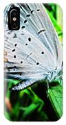 Eastern Tailed Blue Butterfly IPhone Case