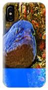Eel In A Crack Between Two Anemone Worlds In Monterey Aquarium-california IPhone Case