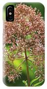 Epargyreus Clarus On Joe-pyed Weed IPhone Case