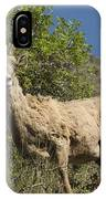 Ewe 3 IPhone Case