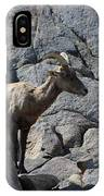 Ewe Bighorn Sheep IPhone Case