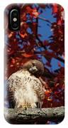 Expressive Hawk IPhone Case