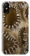 Extreme Close-up Of A Crust Anemone IPhone Case