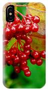 Fall Berries IPhone X Case