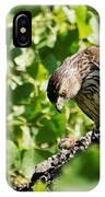 Female Cooper's Hawk Feeding IPhone Case