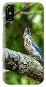 Female Eastern Bluebird Portrait IPhone Case