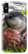 Female Mallard Duck Resting 4 IPhone Case