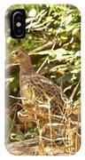 Female Ring-necked Pheasant - Phasianus Colchicus IPhone Case