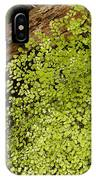 Fern Adiantum Microphyllum.  IPhone Case
