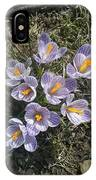 First Crocuses Of Spring 2015 IPhone Case